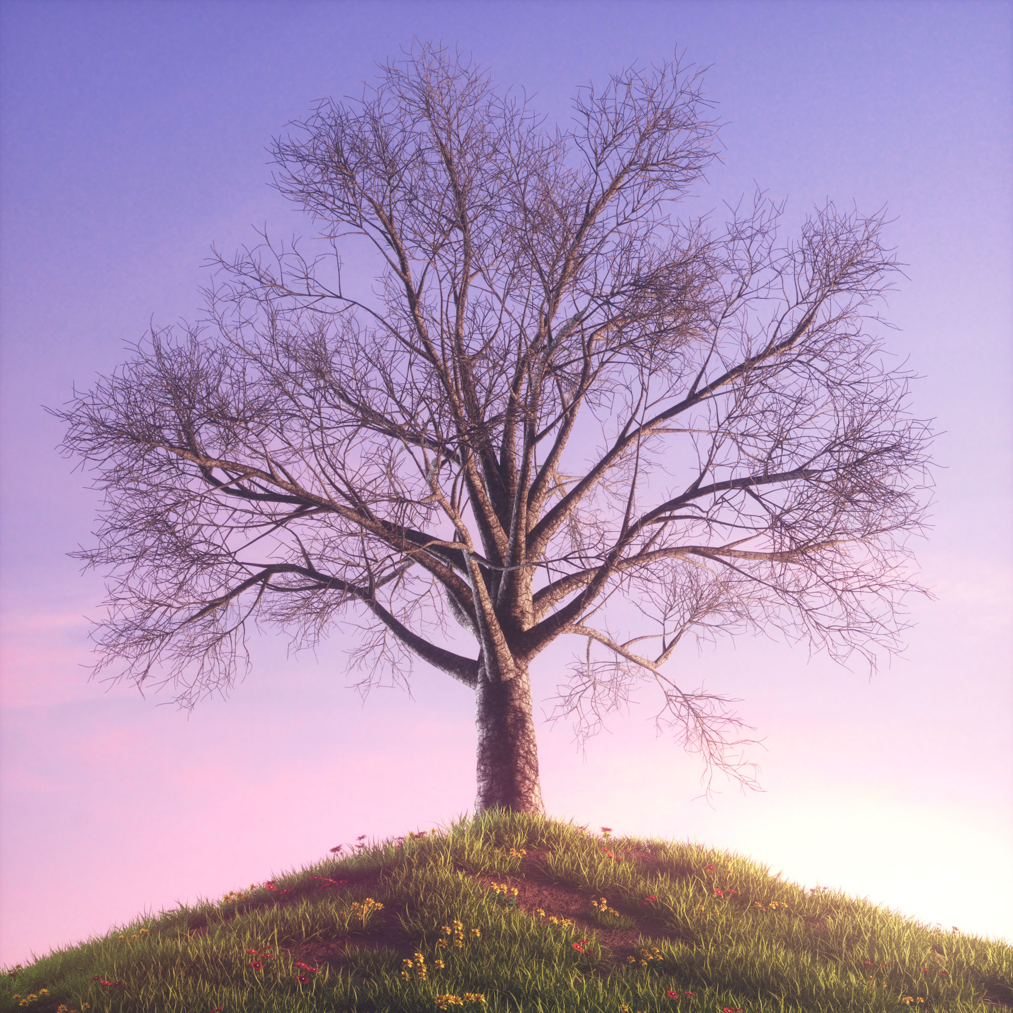 tree_morning_v5-0-00-00-0035